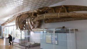 МВ-А_вы_видели_мохнатого_носорога-3